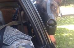 Cães farejadores encontram drogas enterradas embaixo de calçada de cidade do MS