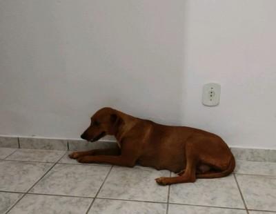 Cadela foi resgatada pela polícia - Foto: PMA