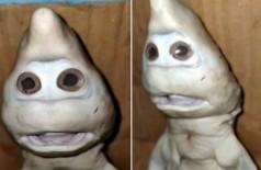Filhote de tubarão com 'expressão humana' (Foto: Reprodução)