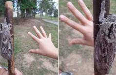 Mariposa gigantesca tem o tamanho de uma mão - Foto: Reprodução/Facebook(Amateur Entomology Australia)