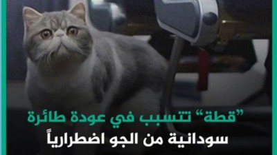 Ataque de gato a piloto no Sudão repercutiu no Oriente Médio - Foto: Facebook @TaybaSD / Reprodução