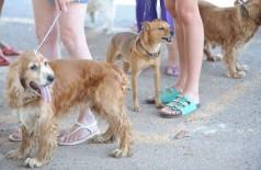 Estudo da Fiocruz avalia contaminação de cães e gatos pelo SARS-CoV-2 (Foto: Fábio Rodrigues Pozzebom/Agência Brasil)
