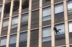 Gato sobrevive a pulo do quinto andar para fugir de incêndio; Assista vídeo