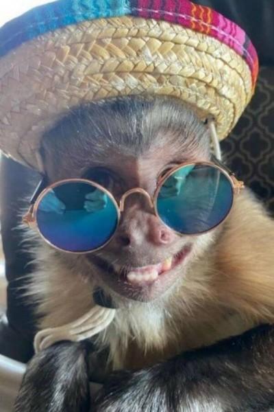 Macaco George (Foto: Reprodução/Instagram)