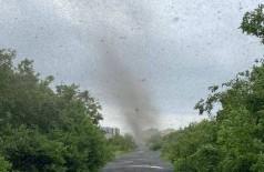 'Tornado de mosquitos' na Rússia (Foto: Reprodução/Siberian Times)