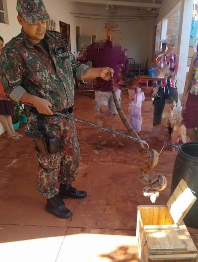 Polícia Militar Ambiental captura jiboia de dois metros em residência de MS