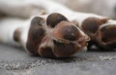 Morte de pet pode dar licença de dois dias no trabalho para o tutor na Colômbia - Foto: Freepik/freestockcenter