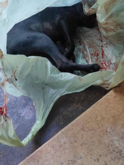 Homem é preso por maltratar cachorro até a morte em Dourados