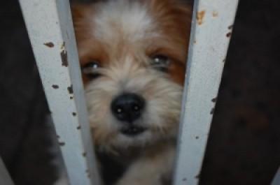 Chip deverá conter informações da vida do animal e informações sobre o proprietário (Paulo Francis)