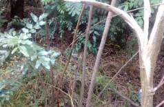 Com chuvas e abandono, terreno se torna criadouro de bichos transmissores de doença e peçonhentos
