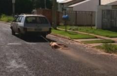 Cachorro sendo arrastado por avenida revolta moradores