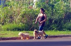 Mais da metade dos domicílios do estado tem pelo menos um cachorro (Arlindo Florentino)