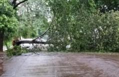 Árvore caiu sobre a Rua Oliveira Marques e bloqueou o trânsito no local (94 FM)