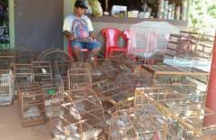 Dono de bar em Dourados é flagrado com mais de 50 pássaros; multa pode chegar até R$100 mil